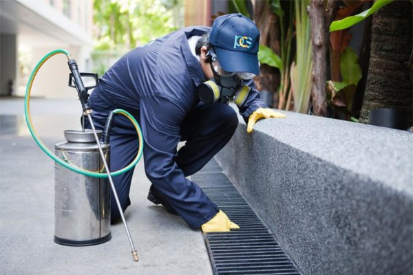 Things to consider before hiring a pest control company in Dubai
